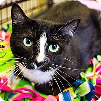 Adopt A Pet :: A..  Jordan - Charlotte, NC