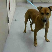 Adopt A Pet :: VICTOR - Conroe, TX