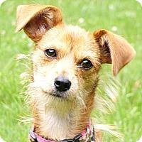 Adopt A Pet :: Hope - Mocksville, NC