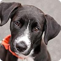 Adopt A Pet :: Nike - Santa Monica, CA