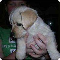 Adopt A Pet :: Winston - Glastonbury, CT