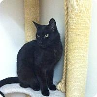Adopt A Pet :: Vader - Trevose, PA