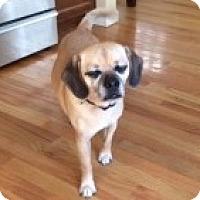 Adopt A Pet :: Odie - Strasburg, CO