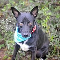 Adopt A Pet :: Paris - Fort Valley, GA