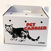 Domestic Shorthair Cat for adoption in Ephrata, Pennsylvania - Blind Date Adoption