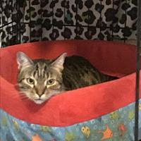 Adopt A Pet :: TC - Lauderhill, FL