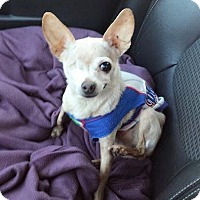 Adopt A Pet :: Rocket~ADOPTED!! - Troy, OH