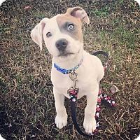 Adopt A Pet :: Rigby - Atlanta, GA