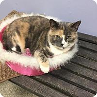 Adopt A Pet :: Fabri - Oak Park, IL