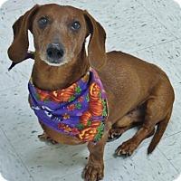 Adopt A Pet :: Oskar - Chambersburg, PA