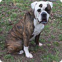 Adopt A Pet :: Ducky - Houston, TX