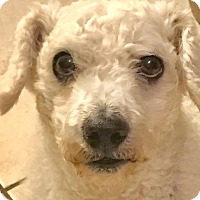 Adopt A Pet :: Sol - Miami, FL