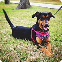 Adopt A Pet :: Flora - Lake Jackson, TX