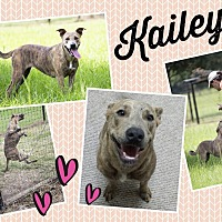 Adopt A Pet :: Kailey - Orange Lake, FL