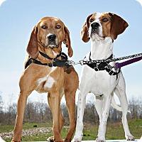 Adopt A Pet :: Lizzie - Bellingham, WA