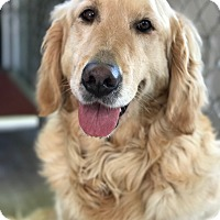 Adopt A Pet :: Carlie - Pacific, MO