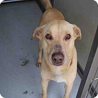 Adopt A Pet :: Buddy - Newnan City, GA