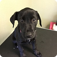 Adopt A Pet :: Chastity - North Myrtle Beach, SC