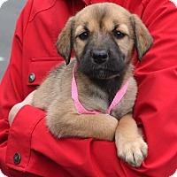 Adopt A Pet :: *Cherry - PENDING - Westport, CT
