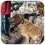 Photo 2 - Bloodhound Mix Dog for adoption in Oakland, Arkansas - Carmel