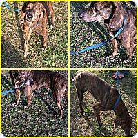 Adopt A Pet :: THELMA - Inverness, FL