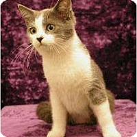 Adopt A Pet :: Michael - Sacramento, CA