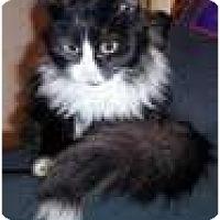 Adopt A Pet :: Giselle - Arlington, VA