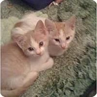 Adopt A Pet :: Mr. Wiggles - Mobile, AL