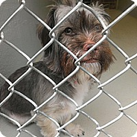 Adopt A Pet :: Holly - Berlin, CT