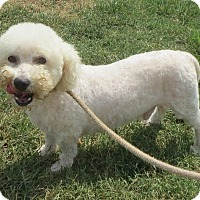 Adopt A Pet :: Casey Jones - Salem, NH
