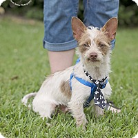 Adopt A Pet :: Bernie - Kingwood, TX