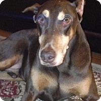 Adopt A Pet :: Kane - Arlington, VA