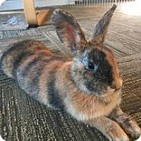 Adopt A Pet :: Saturn - Woburn, MA