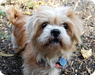 Terrier (Unknown Type, Small) Mix Dog for adoption in Wilmington, Delaware - Patron