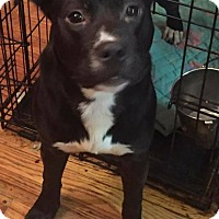 Adopt A Pet :: Dixie - Warren, MI