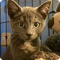 Adopt A Pet :: Cupcake - East Brunswick, NJ