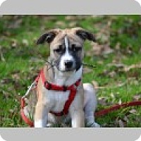 Adopt A Pet :: Jane - Pittsboro, NC