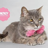 Adopt A Pet :: Smokey (@Petsmart Woodhaven) - Wyandotte, MI