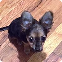 Adopt A Pet :: JT - Houston, TX