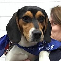 Adopt A Pet :: Olivia- No Longer Accepting Applications - Potomac, MD