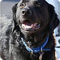 Adopt A Pet :: TJ - Cumming, GA