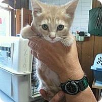 Adopt A Pet :: Rayjen - Grand Rapids, MI