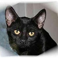 Adopt A Pet :: Merlot - Montgomery, IL