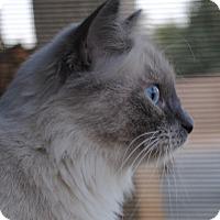 Adopt A Pet :: Layla - Palmdale, CA