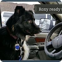 Adopt A Pet :: Roxanne (Rox) video - Monrovia, CA