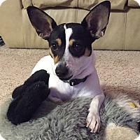 Adopt A Pet :: Nugget In San Antonio - San Antonio, TX