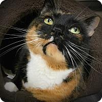 Adopt A Pet :: RileyGene - Webster, MA
