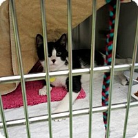 Adopt A Pet :: Bucatini - THORNHILL, ON