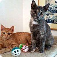 Adopt A Pet :: ToniAnn and Patti - Staten Island, NY