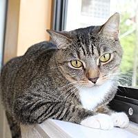 Adopt A Pet :: Maya - Boca Raton, FL